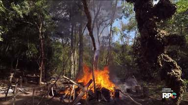 Reportagem exclusiva mostra tráfico de drogas e destruição de plantações de maconha - Você vai ver como a destruição das plantações impacta na economia do narcotráfico
