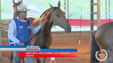 Jacareí vai reunir criadores e expositores de cavalos - Evento vai ser no fim de semana.