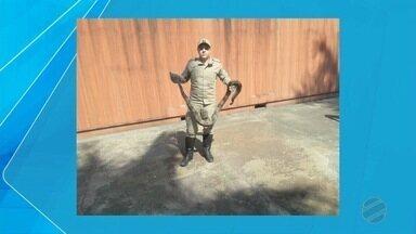 Cobra de dois metros é capturada em rua de Corumbá - Animal estava na rua Candelária e foi capturada pelo Corpo de Bombeiros.