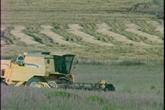 Crescimento da área plantada muda cenário dos campos na Campanha - Confira a reportagem.