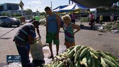 Comerciantes do Ceasa, no Recife, comemoram vendas de milho para o São João - Expectativa é que a meta de vender 13 milhões de espigas seja alcançada.