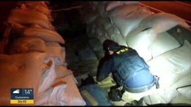 Cerca de 2 toneladas de maconha e quase 1 de cocaína foram aprendidas no sul de SP - Ocorrências foram em Barra do Turvo e no Porto de Santos.