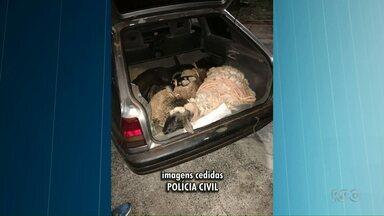 Polícia encontra carneiros no porta-malas de um carro, em Umuarama - O veículo e os carneiros foram levados para a delegacia de Umuarama.