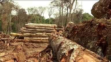 Pesquisadores temem que Brasil não cumpra o Acordo de Paris por causa do desmatamento - Em artigo publicado hoje, cienstistas afirmam que medidas do governo aceleraram a destruição de florestas.