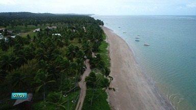 Entenda a importância da salsa nas praias - Vegetação tem como objetivo reduzir o efeito da erosão marinha e difucultar o avanço do mar.