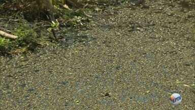 Esgoto e falta de manutenção prejudicam lagoa no distrito do Artemis em Piracicaba - Moradores da região reclamam da situação e solicitam limpeza da prefeitura.
