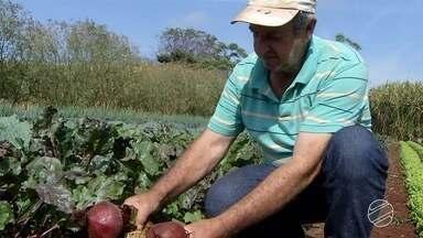 Prévia do Censo Agro do IBGE aponta que aumentou o número de produtores no estado - Esse crescimento se deve aos pequenos.