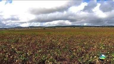 Número de mulheres no campo diminuiu, diz Censo Agropecuário - Levantamento de dados durou cerca de cinco meses.