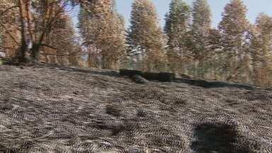 Aumentam casos de queimadas nas maiores cidades do Sul de Minas - Aumentam casos de queimadas nas maiores cidades do Sul de Minas
