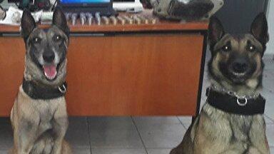 Cães da PM em Suzano ajudam policiais a apreender mais de 6 quilos de drogas - O caso foi no bairro Suzanópolis.