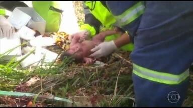 Bebê nasce em acidente trágico na Régis Bittencourt, no Vale da Ribeira, em SP - Uma grávida pegou carona em um caminhão. O motorista perdeu o controle da direção e ela foi jogada para fora. A mulhermorreu, mas os socorristas conseguiram salvar a menina, que pesa três quilos e só teve ferimentos leves.