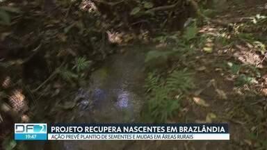 Projeto tenta recuperar nascentes de área rural de Brazlândia - Desde 2011, já foram plantados mais de 600 mil mudas foram plantadas no DF. Produtores rurais de Brazlândia já começaram a perceber os resultados.