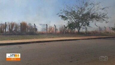 Fogo atinge milharal no campus da UFG, em Goiânia - Corpo de Bombeiros informou que os próprios funcionários da universidade colocaram fogo em uma área experimental da plantação, mas as chamas se espalharam e atingiram quase toda área plantada.