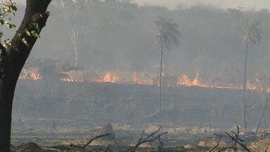 Incêndio atinge área do antigo IPA de Rio Preto - Um incêndio atingiu pela terceira vez a área verde do antigo IPA, em São José do Rio Preto (SP), nesta segunda-feira (30).