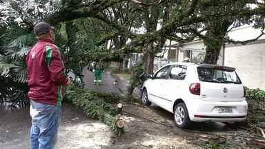 Árvore cai em cima de dois carros na Zona 5 em Maringá - Até agora choveu três vezes mais do que o previsto para o mês de agosto.