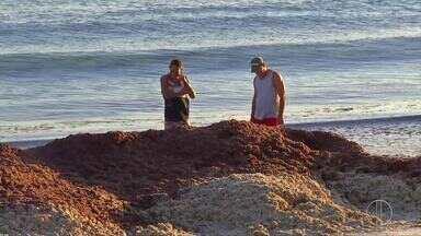 Fenômeno natural deixa a Praia do Forte, em Cabo Frio, coberta de algas vermelhas - Assista a seguir.