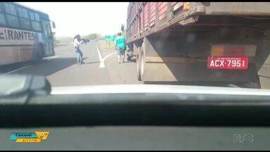 Polícia prende duas pessoas e apreende caminhão com 4 toneladas de drogas - O Denarc fez a prisão quando o caminhão vinha do Mato Grosso do sul para o Paraná