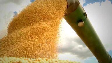 Confira o Momento agronegócio desta sexta-feira (10) - Confira o Momento agronegócio desta sexta-feira (10)