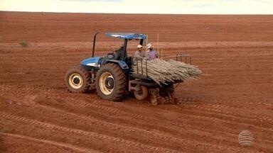 Confira as notícias rurais em destaque na região de Presidente Prudente - Produção de mandioca foi um dos assuntos da semana.
