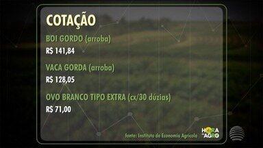 Arroba do boi gordo fecha a semana cotada a R$ 141,84 - Já a da vaca gorda vale R$ 128,05.