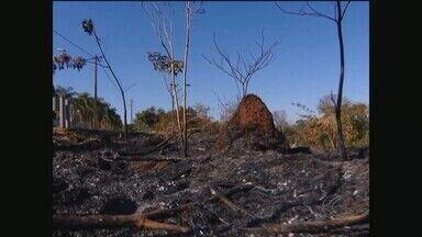 Corpo de Bombeiros faz mapeamento de bairros com alto índice de queimadas em Uberlândia - Foram registradas 112 ocorrências em julho ante a 59 registros no mesmo período do ano passado. Corporação está em alerta.