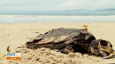 Morte de tartarugas marinhas preocupa pesquisadores no sul da Bahia - Mais de 20 animais morreram em menos de três semanas na região.