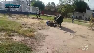 Búfalos fogem, atacam pessoas e causam 'terror' em Santarém - Animais fugiram do bairro Prainha e percorreram ruas do município e chamaram atenção por onde passavam. Um dos animais foi logo capturado; o outro causou problemas sérios em vários locais.