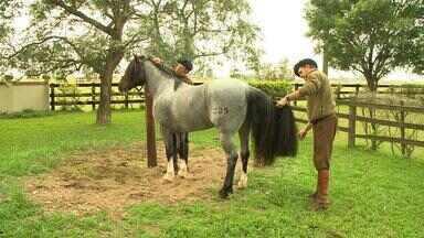 Há poucos dias da Expointer, animais recebem tratamento e cuidados especiais no RS - Assista ao vídeo.