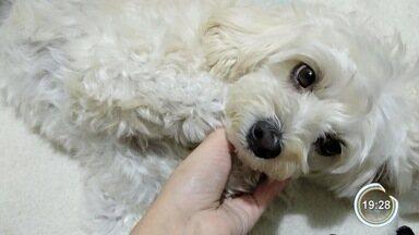 Família acusa pet shop em São José dos Campos de perder cadela - Caso ocorreu na quinta (23), quando empresa buscou animal na casa da cliente para tomar banho.
