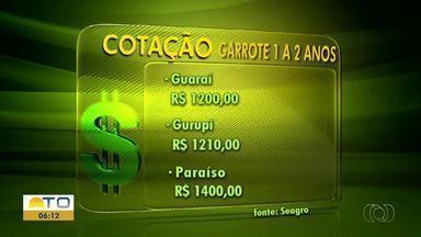 Confira os valores da cotação para o Mercado do Boi Gordo - Confira os valores da cotação para o Mercado do Boi Gordo