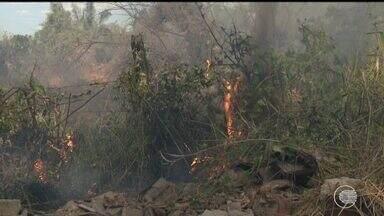 Piauí registra o dobro de queimadas comparado ao mesmo período do ano passado - Piauí registra o dobro de queimadas comparado ao mesmo período do ano passado