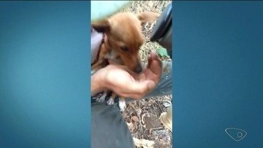 Bombeiro faz resgate de cachorro preso em pedra, em Colatina, ES - Sargento usou todos os conhecimentos em salvamento em altura para resgatar o cachorro.