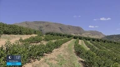 Minas Gerais chega a 1 milhão de hectares de lavouras de café - Minas Gerais chega a 1 milhão de hectares de lavouras de café
