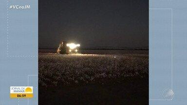 JM no Campo: máquinas trabalham de madrugada para cumprir prazo da colheita de algodão - Veja também que alambiques geram renda para mais de quatro mil agricultores no estado.