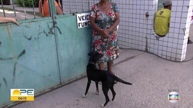 Campanha de vacinação de animais contra raiva tem oito mil pontos em Pernambuco - Doença é transmitida de cães, gatos e morcegos para os homanos e pode causar a morte.