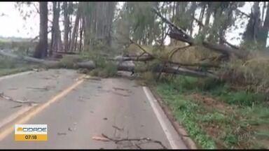 Chuva e vento forte derrubam árvores em estrada de Boa Esperança, MG - Chuva e vento forte derrubam árvores em estrada de Boa Esperança, MG
