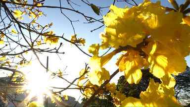 A primavera chega neste sábado no 'Meu Paraná' - Veja as transformações na natureza nesta época do ano