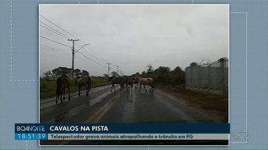 Telespectador registra vários cavalos andando em rua no bairro Uvaranas - E outro cavalo acabou morrendo atropelado no Boa Vista.