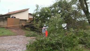 Árvore derruba transformador e deixa mais de 300 casas sem luz - Em Bela Vista do Paraíso a chuva de granizo danificou o telhado de 70 casas.
