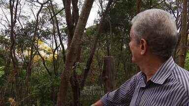 Conheça a história de morador de Governador Valadares que planta árvores há décadas - Quantidade de árvores na cidade ajuda na arborização.