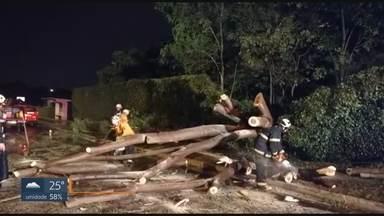 Árvore cai na QL do Lago Sul - Chuva à noite provocou queda. Pista ficou parcialmente bloqueada. Ninguém se feriu.