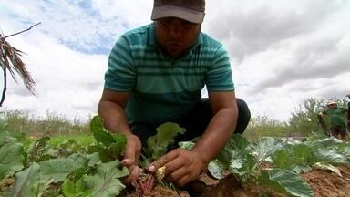 Esclarecimento sobre desertificação - Ministério do Meio Ambiente é responsável pelo projeto
