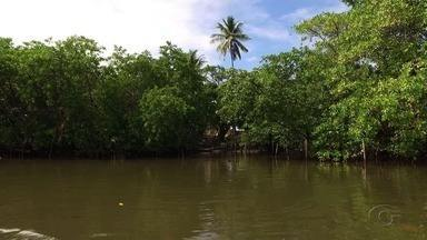 Poluíção prejudica a fauna e a flora na Costas dos Corais - Confira a terceira edição sobre a série de reportagens.