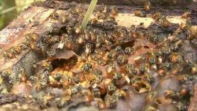 Parte 2: Conheça o produtor que cultiva abelha sem ferrão - Veja perspectivas para o futuro da pecuária