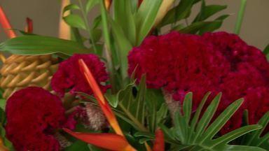 Mercado de cultivo e produção de flores tropicais cresce em Teresina - Mercado de cultivo e produção de flores tropicais cresce em Teresina