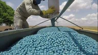 Mato Grosso planta a safra de soja - O estado é o maior produtor do grão no país. A área plantada deve chegar a 10 milhões de hectares. Crescimento de 2% na comparação com a safra passada. Em muitas propriedades, as máquinas trabalham até durante a noite.