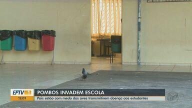 Pombos invadem escola em Pirassununga e pais estão com medo das aves transmitirem doenças - Especialista explica no riscos à saúde por causa do excesso de pombos.