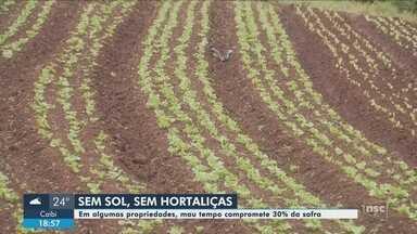 Tempo instável compromete safra de hortaliças no Oeste de SC - Tempo instável compromete safra de hortaliças no Oeste de SC
