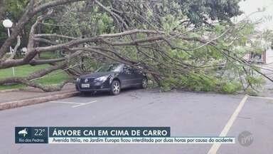 Árvore de grande porte cai e deixa carro estacionado embaixo de galhos, em Piracicaba - Segundo os Bombeiros, árvore não tinha sinal de pragas. Ninguém ficou ferido.