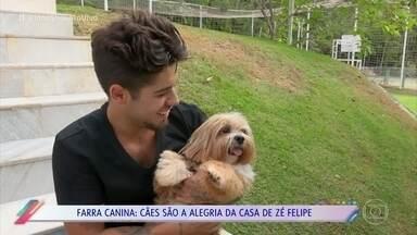 Zé Felipe apresenta sua enorme família pet - Cachorrinhos são a alegria da casa do cantor